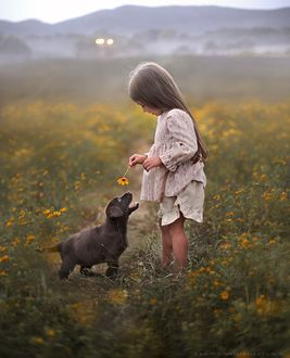 Фото Девочка с цветком в руке рядом с ней милый щенок, смотрящий на нее, by Elena Shumilova