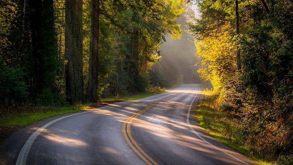 Фото Дорога проходящая через летний лес