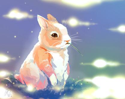 Фото Кролик на полянке, by Tatcu