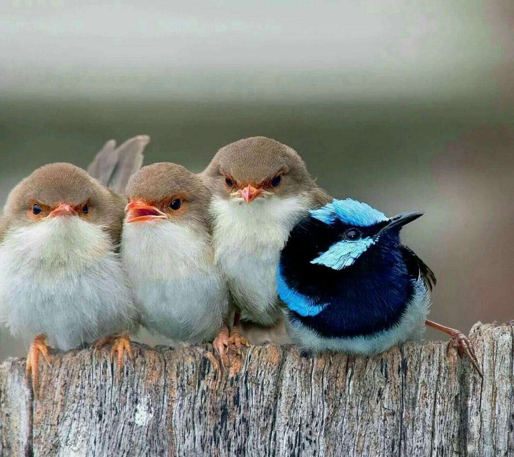 Юбилеем, картинка с птичками на жердочке