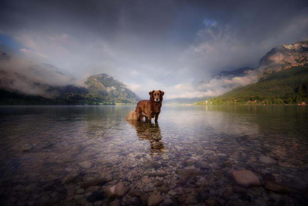 Фото Рыжий пес стоит в воде на фоне горного пейзажа, by Anne Geier