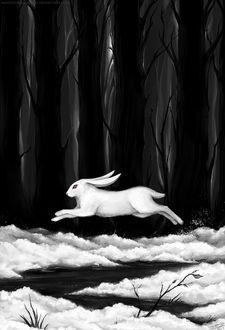 Фото Белый кролик бежит по снегу на фоне леса, by Manticora Miorro