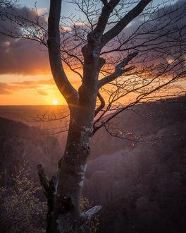 Фото На первом плане дерево на фоне заката, фотограф Patrik Svensson