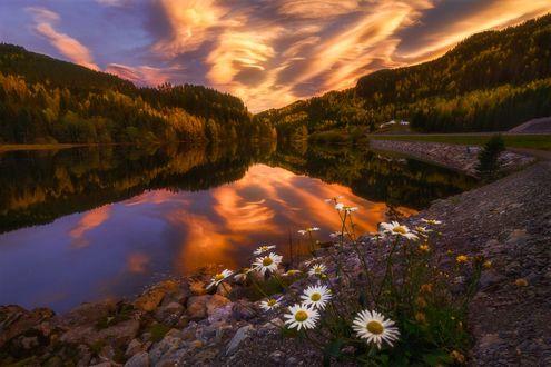 Фото Красивое небо на закате над озером, на переднем плане ромашки, фотограф Ole Henrik Skjelstad