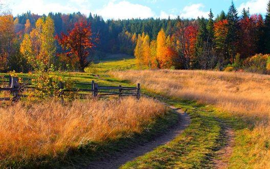 Фото Дорога, уходящая в осенний лес, огибает деревянную изгородь