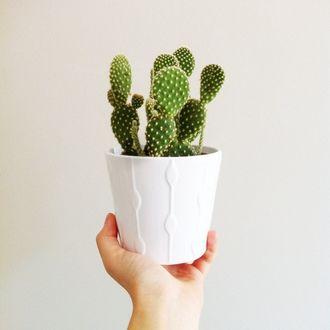Фото Рука держит горшок с кактусом