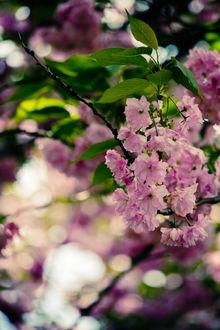 Фото Весенняя цветущая ветка