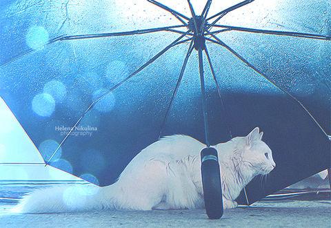 Фото Белая кошечка под зонтом, by Nikulina-Helena