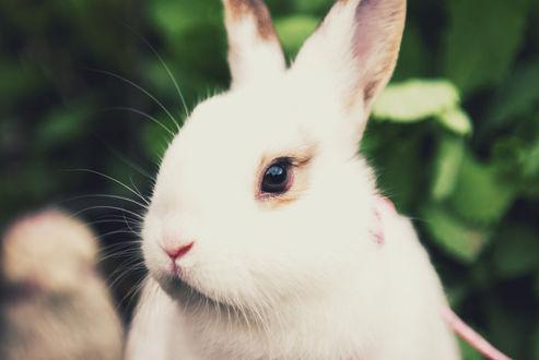 Фото Белый кролик на размытом фоне