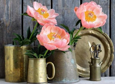 Фото Розовые цветы в чашках