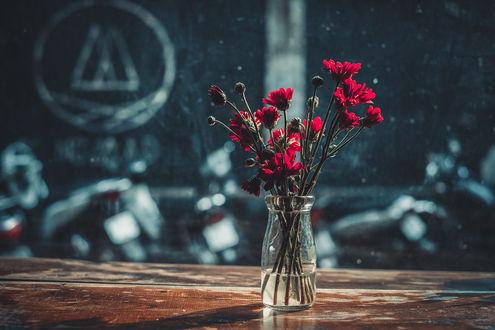 Фото Цветы в вазе, by ginathuyduong