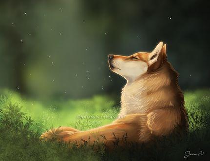 Фото Волк греется в лучах солнца, by Johan-N