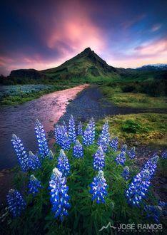 Фото На первом плане голубые цветы на пути к водопаду, фотограф JosГ© Ramos (© zmeiy), добавлено: 25.05.2017 18:32