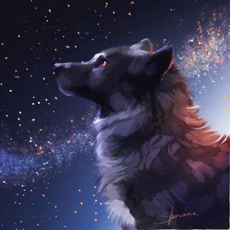 Фото Портрет волка в профиль на фоне ночного неба, by Sharaiza