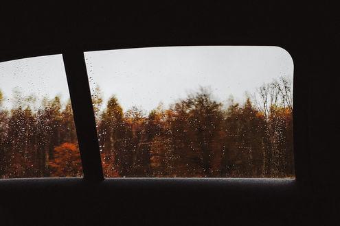 Фото Вид из окна авто на осенние деревья, by Rona-Keller