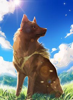 Фото Волк на фоне природы и голубого неба с облаками, by Sharaiza