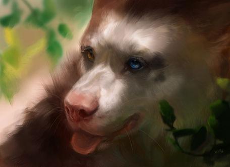 Фото Фантастический зверь, помесь волка и медведя, by KEPZONE