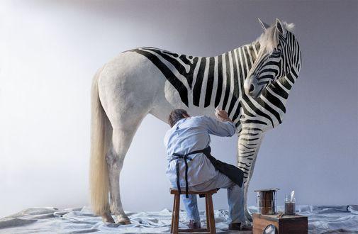 Фото Мужчина рисует на белой лошади полосы