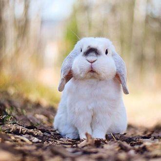 Фото Белый кролик сидит на осенних листьях