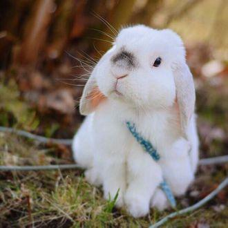 Фото Белый кролик на природе