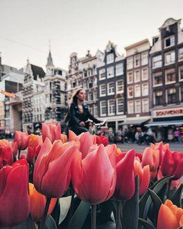 Фото Девушка на велосипеде на фоне города и тюльпанов
