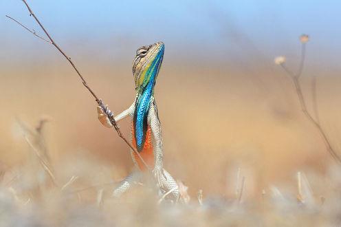 Фото Красочная рептилия держит в руках веточку, будто воин держит меч, готовясь к бою