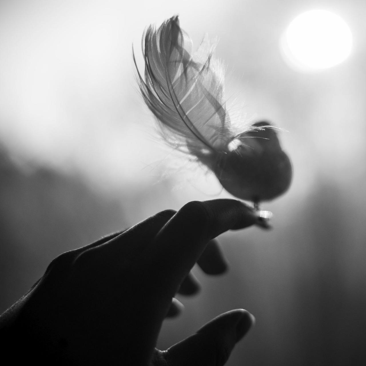 Рука и птица картинка