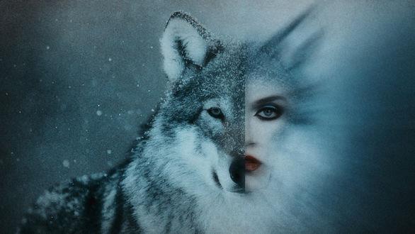 Фото Двуликий образ волчицы. Фотограф Юрий Солотин