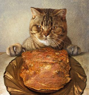Фото Важный кот сидит перед огромным блюдом с куском мяса