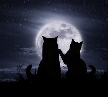 Фото Романтическое свидание под луной, фото Ириной Кузнецовой