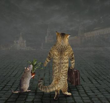 Фото Кот с мышкой гуляют по Красной площади, фото Ирины Кузнецовой