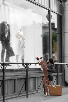 Фото Девушка и собака рассматривают одежду в витрине, фотограф Светлана Писарева