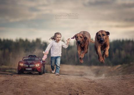 Фото Девочка с двумя датскими догами бежит по дороге, фотограф Андрей Селиверстов