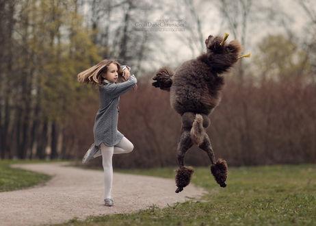 Фото Девочка танцует с королевским пуделем, фотограф Андрей Селиверстов