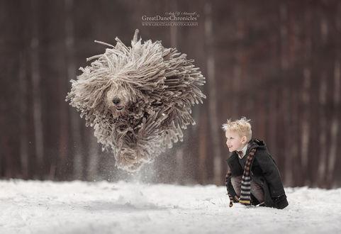 Фото Мальчик смотрит на прыгающего комондора, фотограф Андрей Селиверстов