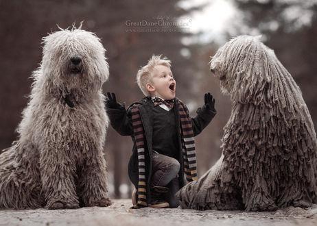 Фото Мальчик сидит между двумя комондорами, фотограф Андрей Селиверстов