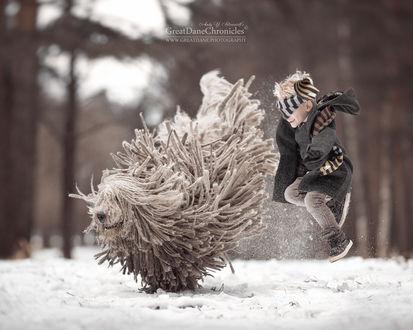 Фото Мальчик прыгает с комондором, фотограф Андрей Селиверстов