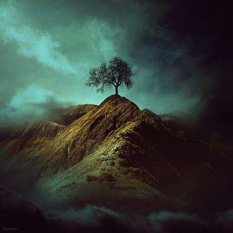 Фото Одинокое дерево на пригорке на фоне мрачного облачного неба, by BaxiaArt
