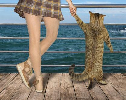 Фото Девушка держит кота за лапу и они, стоя на пристани, любуются морским пейзажем, фотограф Ирина Кузнецова