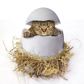 Фото Кошка выклюнулась из яйца, фотограф Ирина Кузнецова