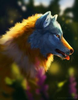 Фото Бело-рыжий волк, by CorvusHound