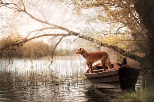 Фото Пес в лодке на озере. Фотограф Анна Аверьянова