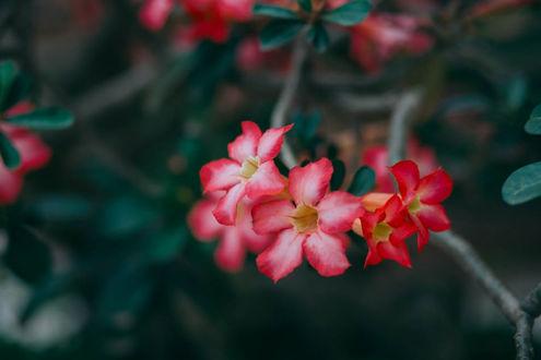 Фото Розовые цветы на ветке дерева