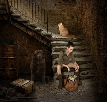 Фото Девушка в тоске сидит на обветшалой, грязной лестнице с сумкой, полной денег, рядом валяется револьвер и сидит черный пес, позади, на лестничной клетке сидит рыжий кот и смотрит вверх, а на ржавой жестяной бочке под лестницей свернувшись калачиком лежит черная кошка
