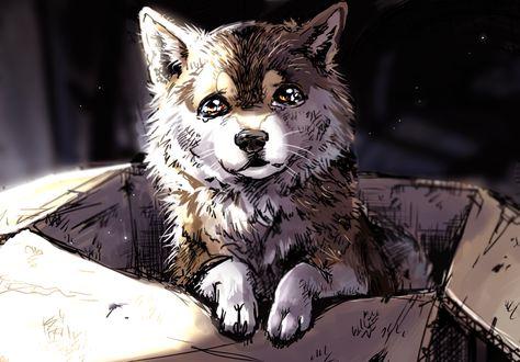 Картинки волка на аву: красивые авы для ВК | 330x474