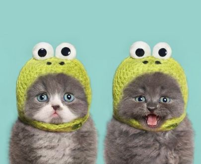 Фото Два милых котенка в шапках лягушат