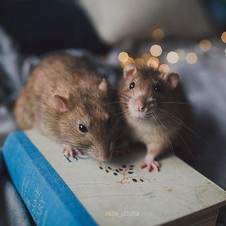 Фото Два мышонка на мини книге