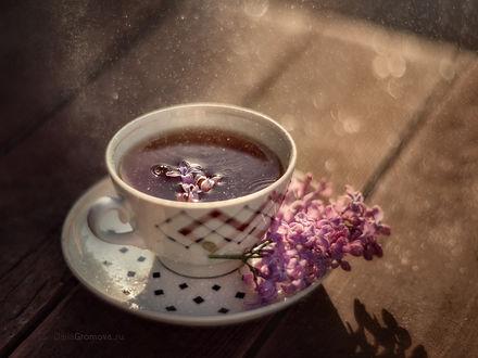 Фото Сиреневый чай в чашке. Фотограф Дарья Громова
