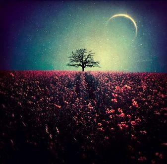 Фото Одинокое дерево на горизонте, в конце цветочного поля на фоне ночного неба с месяцем, Baxia Art