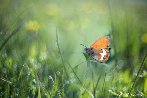 Фото Бабочка сидит на растении, фотограф Wil Mijer